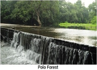 polo_forest